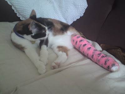 Cat Leg Broken http://miaowmix.blogspot.com/2009/12/peatrie-with-broken-leg.html