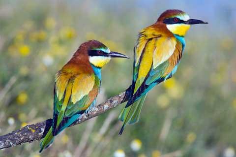 ფანჯარა: Birds  Birds
