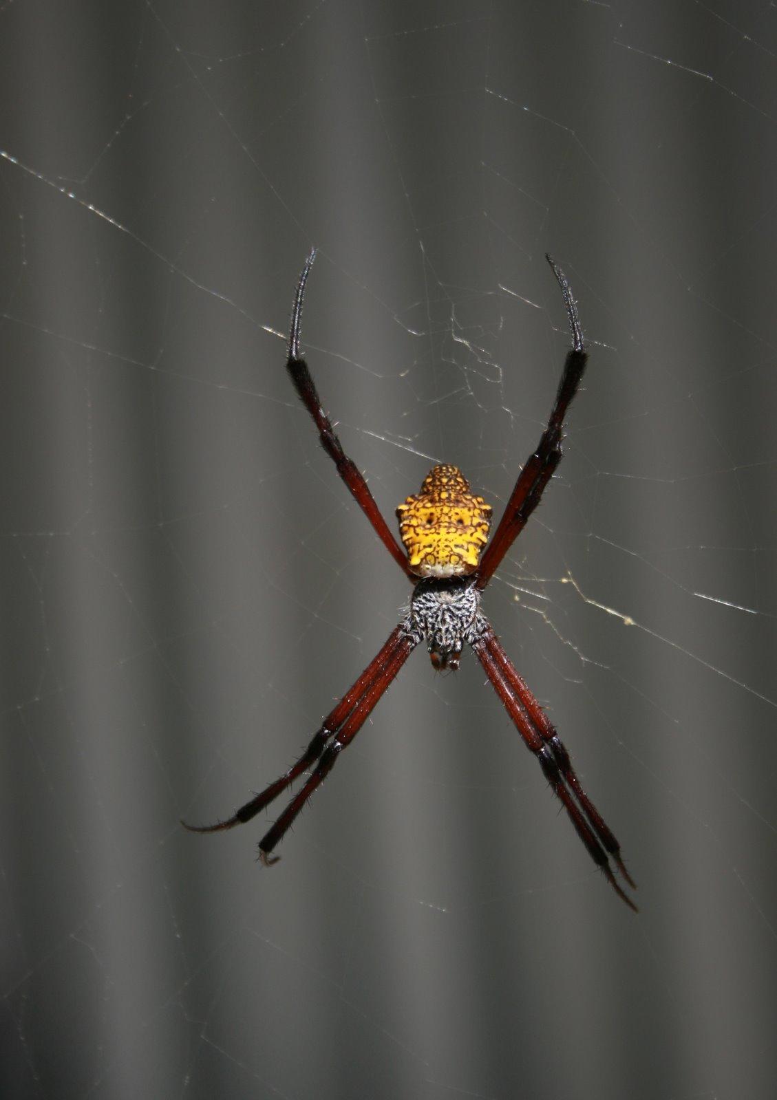 [spider-banana]