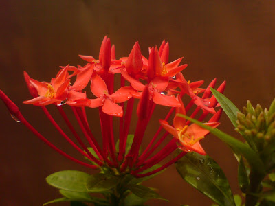"""natural,flower,landscape,view"""