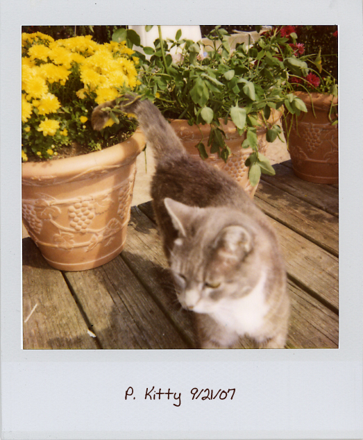 [p-kitty2.jpg]
