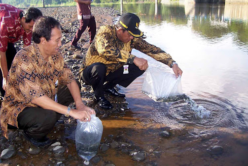 Penebaran 5.000 Benih Ikan di Bendung Boro
