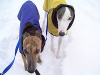 Girly Girl and Blue greyhound out in the snow