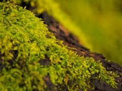 Rain Forest Moss  1/10