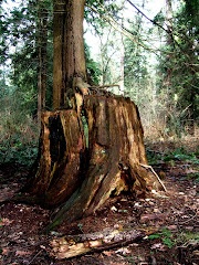 Old Growth 2/09