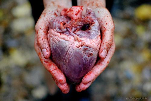 сердце фото орган