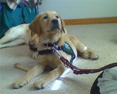 Puppy #5 Quebec (DELLA/BOSWORTH))