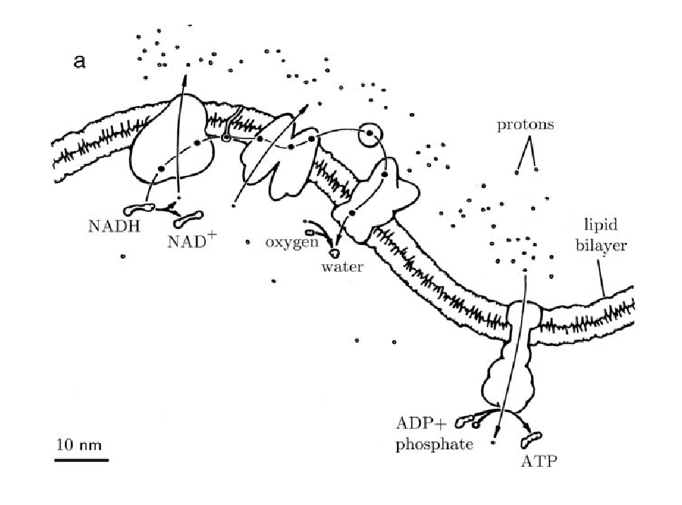 protein phosphorylation by semisynthesis from paper to practice