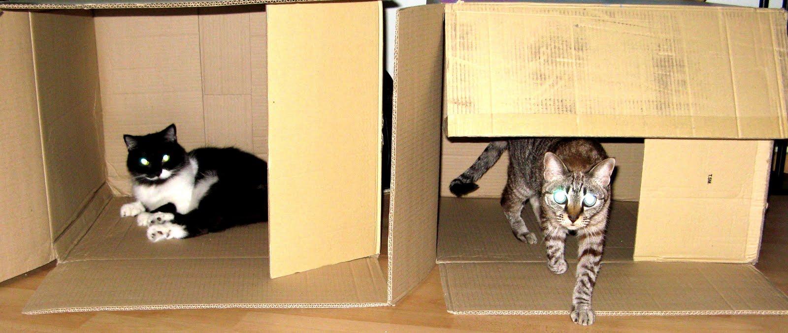 Как сделать домик для кота своими руками: 13 идей и мастер классов 52