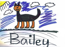 Bailey by Lucy