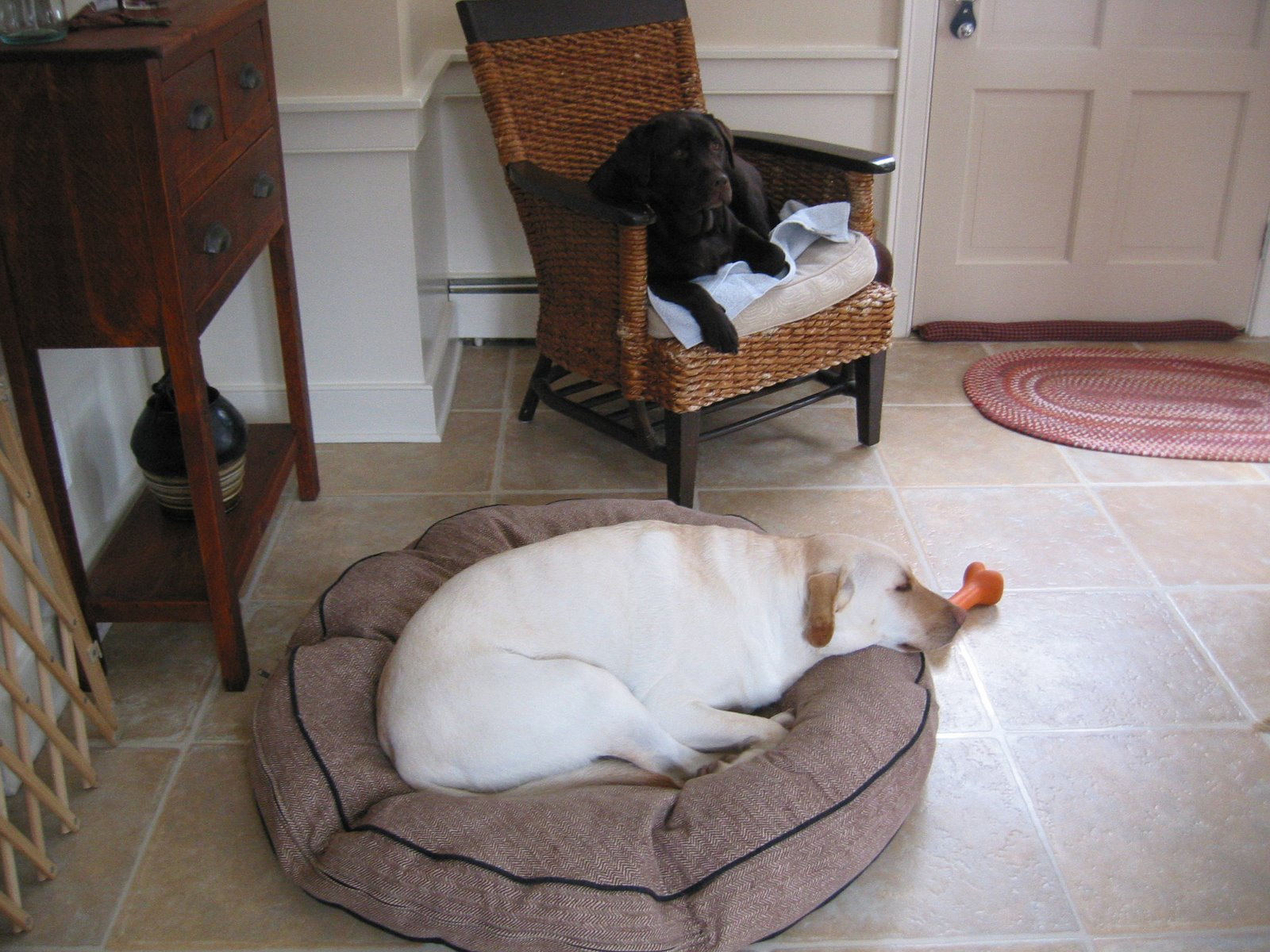 [IMG_0282.jpgsmart+dogs]