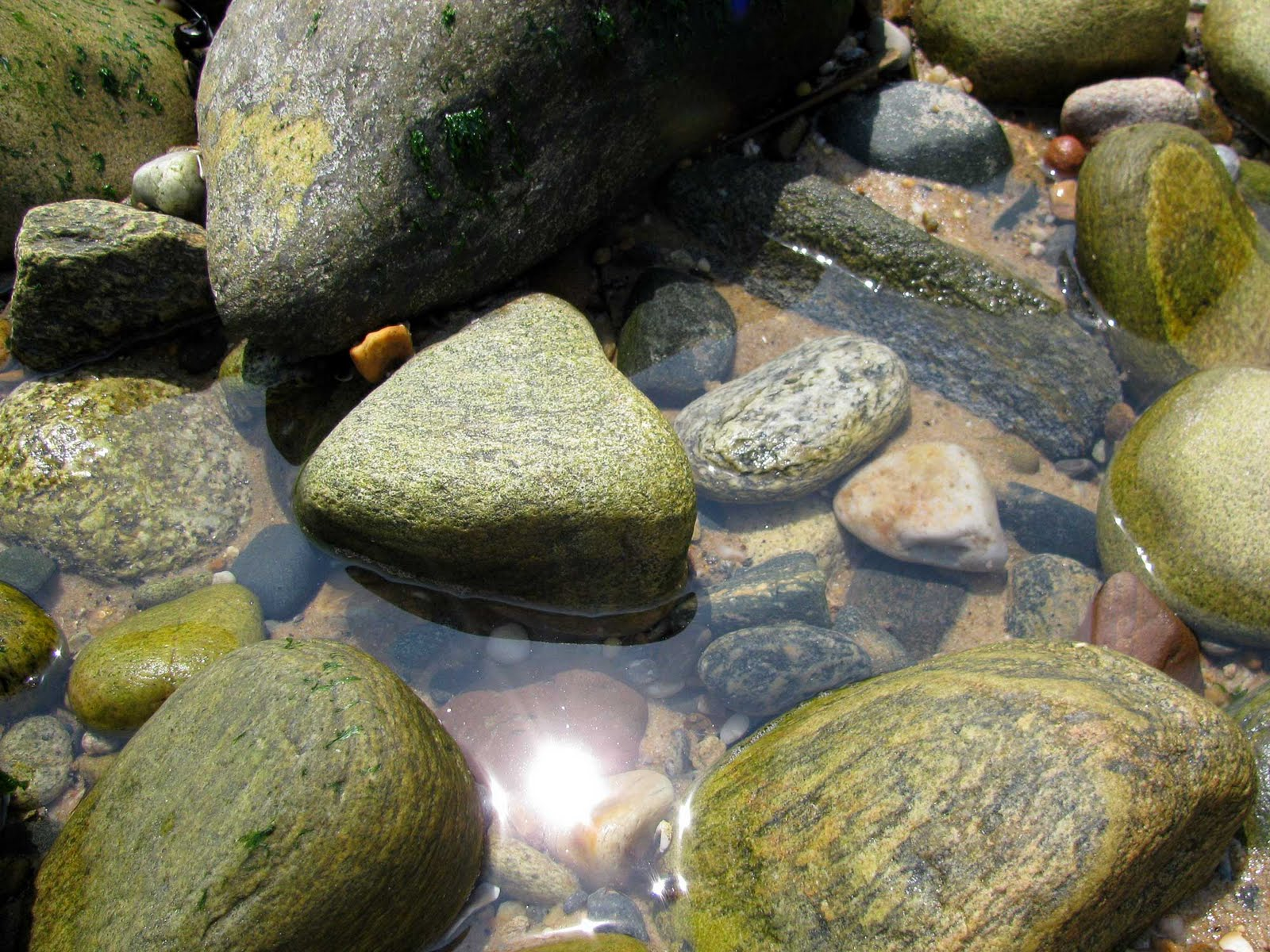 montauk reflections and heart shaped rocks ~ Long Island Daily
