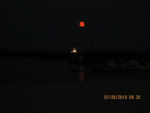 AHCCA Moonglow