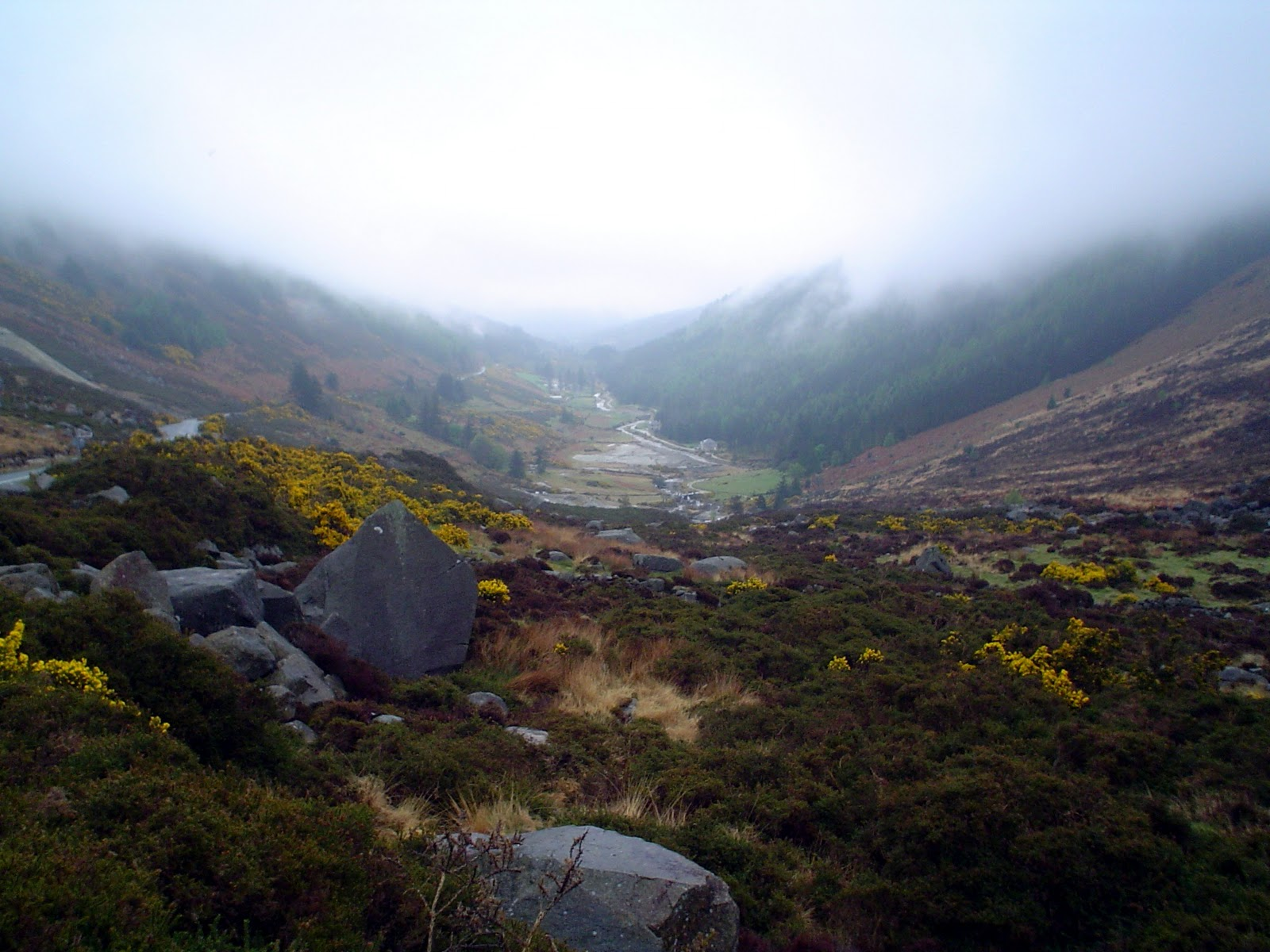 Wicklow Ireland  City new picture : The Vegetarians Abroad: Wicklow Mountains County Wicklow