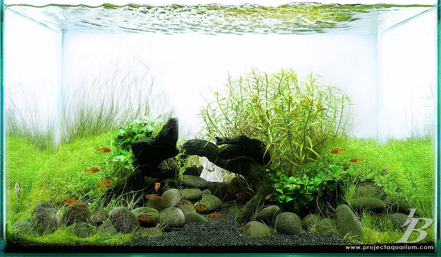 Aquariumguide Beautiful Planted Aquariums