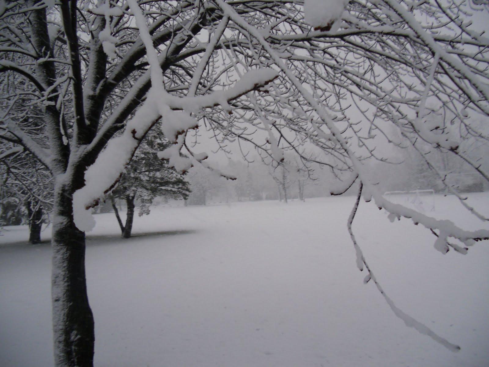 snow2 - amazing photos of snow falling