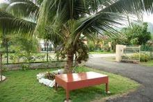 Beristirehat di bawah pohon kelapa