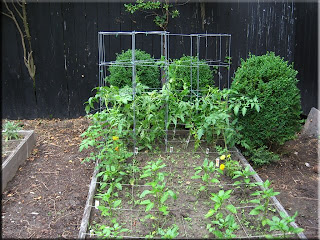 tomatoes, peppers, mesclun mix