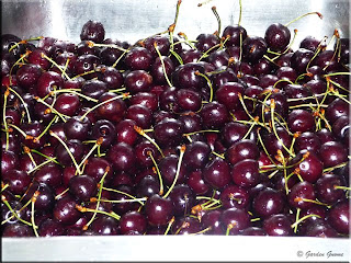 sink full of black cherries
