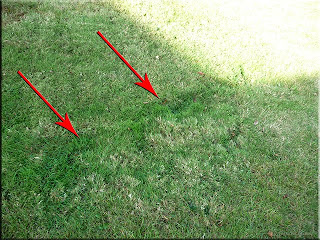 indications in the grass