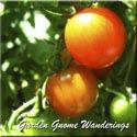 Garden Gnome Wanderings