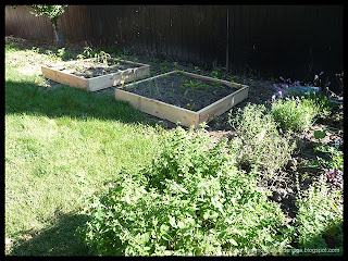 new raised beds planted
