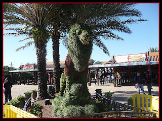 lion topiary at Busch Gardens, Tampa, Florida
