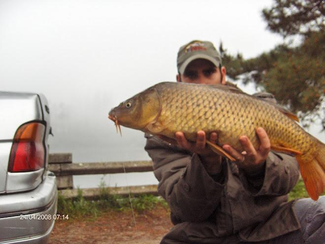 Carpa com 4,3 kg cernada 24 Abril 2008