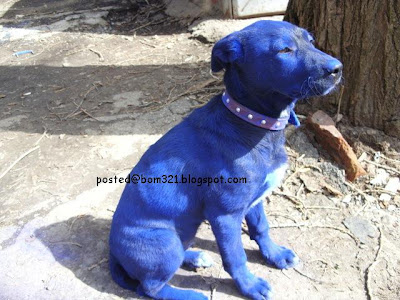 avatar dog