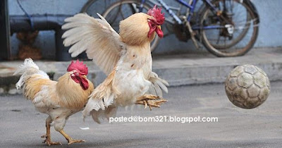 chicken soccer