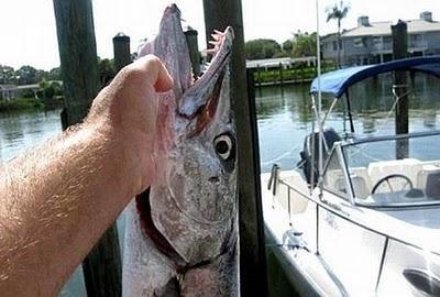 Akibat Digigit Ikan !