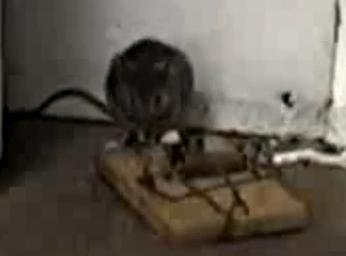 Tikus Yang Bertuah !