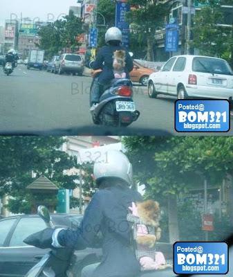Cara Selamat Bawa Haiwan Peliharaan Naik Motosikal !