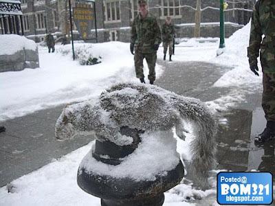 Haiwan Mati Kesejukan Di Salji !
