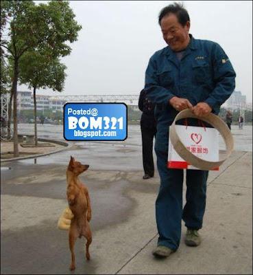 Anjing Jalan Berdiri !