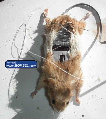 Tetikus Dari Tikus