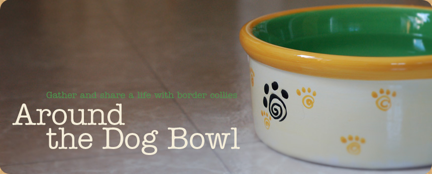 Around the Dog Bowl