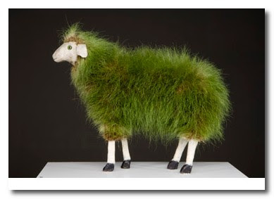 grass sheep