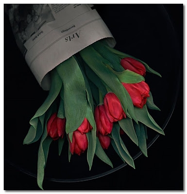 john grant studios red roses on black background