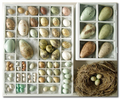 Original Replica Birds Eggs