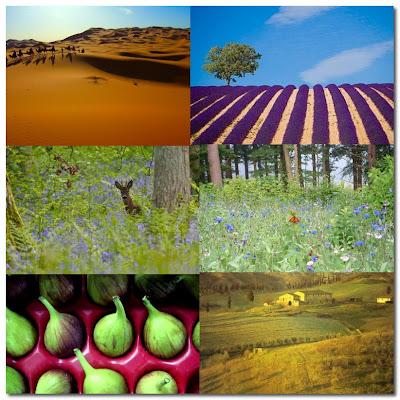 nature's colours