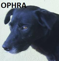 OPHRA