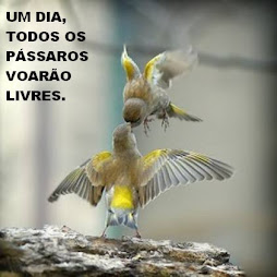 pássaros foram criados para voar