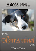 olhar animal