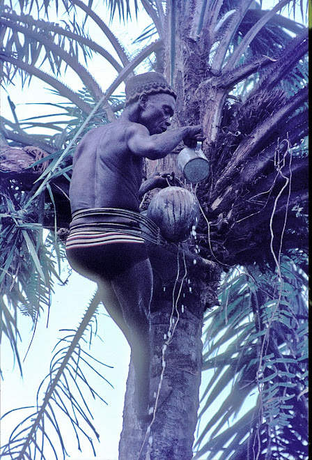 Pa Sam - collecting palm wine near Vaama