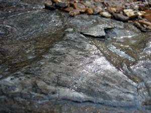 [042807+fossil.jpg]