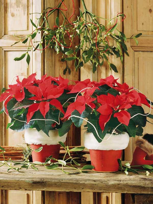 100% Natal - Vaso de papai Noel