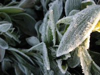 Gardening: What to Do After a Hard Freeze