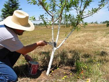 your local knows your soil and growing conditions and will carry fruit tree varieties that will do well in your area