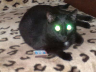 кот Басик балуется со спичками производства фабрики Белка-Фаворит